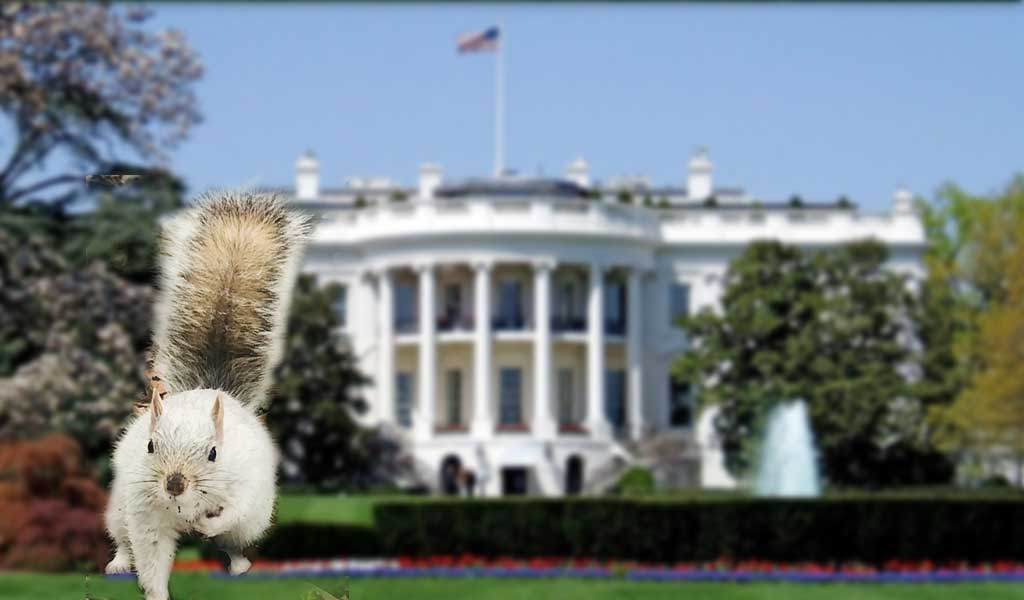 white squirrel in front of white house